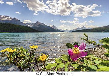 azzurramento, rosa canina, e, giallo, potentilla, vicino, medicina, lago, diaspro, nazionale, park., alberta, canada