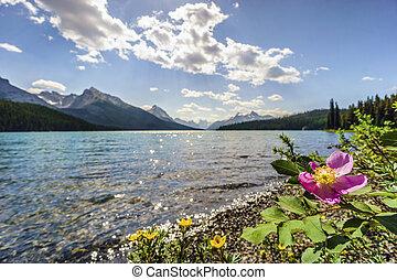 azzurramento, rosa canina, vicino, medicina, lago, diaspro, nazionale, park., alberta, canada