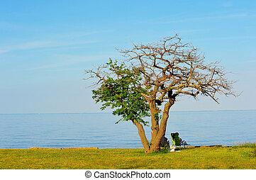 bágyasztó, emberek, chesapeake öböl, maryland, tengerpart
