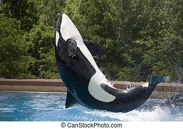 bálna, fricskázó