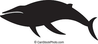 bálna, vektor