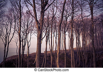báltico, floresta, vista mar