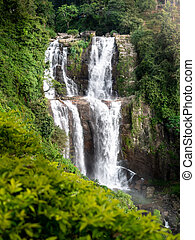bámulatos, esőerdő, vízesés, kilátás, dzsungel