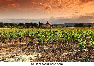 bámulatos, szőlőskert, napnyugta, alatt, franciaország