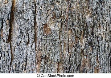 bárka, fa, háttér