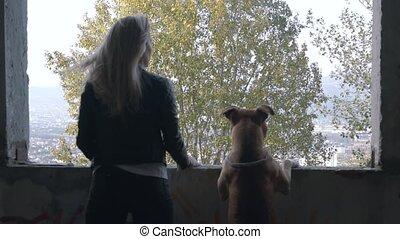 bâtiment abandonné, américain, opening., chien, fenêtre, terrier, debout, staffordshire, blond, jeune