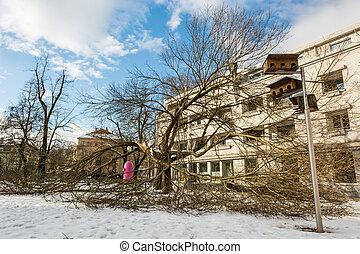 bâtiment, arbre cassé, infront