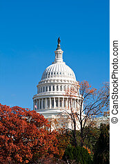 bâtiment, etats-unis, washington dc, automne, capital, feuilles, rouges