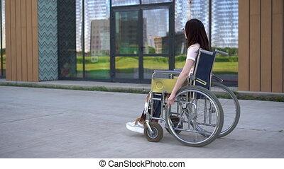 bâtiment., fauteuil roulant, spécial, transport, verre, ...