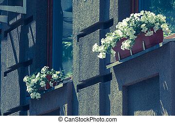 bâtiment, fenetres, moderne, pots, dehors., fleurs blanches