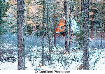 bâtiment, mystère, extérieur, chasse, bois, arbres., derrière, pin, forest., top secret, maison, maison, caché, recreation., lodge.