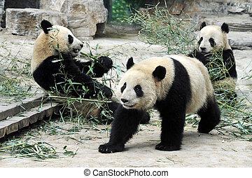 bã¤ren, beijing, porzellan, panda