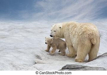 bã¤ren, polar, schnee, familie, stehen