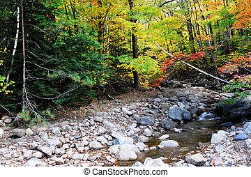 bäck, och, färgrik, höst skog