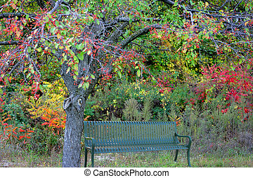 bänk, i park