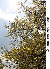 bäume, in, der, himmelsgewölbe