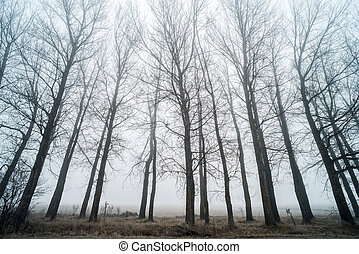 bäume, in, nebel