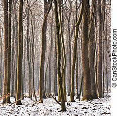 bäume, in, winter