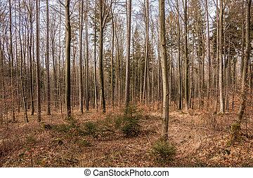 bäume, mitte, von, der, wald