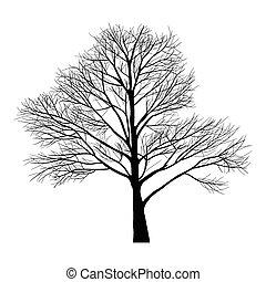 bäume, tot, zweig