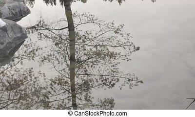 bäume, und, himmelsgewölbe, abstrakt, reflexion, in, pfütze,...