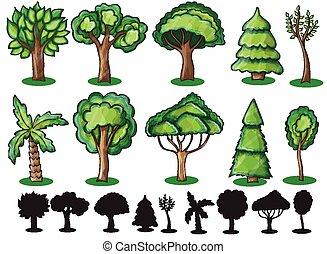 bäume, und, silhoutte, von, bäume