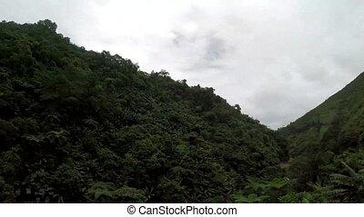 bäume, und, vegetation, entlang, eng, wicklung, rauh, in,...