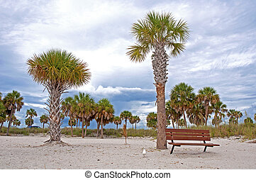 bænk, og, håndflade træ, hos, en, strand