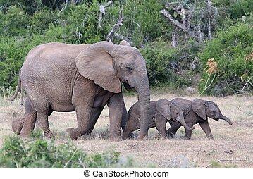 bébé, africaine, maman, éléphants