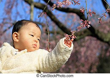 bébé, cerise, boy), (japanese, fleurs