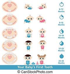 bébé, diagramme, percer dents