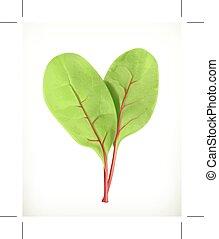 bébé, feuilles, betterave