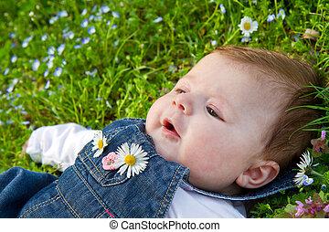 bébé, herbe, vert, pâquerette