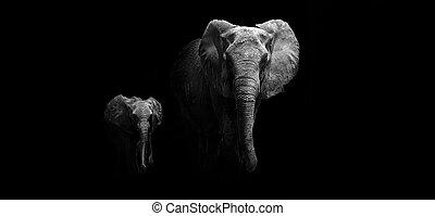 bébé, mère, éléphant