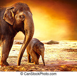 bébé, mère, dehors, éléphant