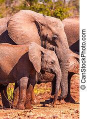 bébé, mère, sien, éléphant, africaine