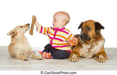 bébé, mignon, flanking, deux, chiens