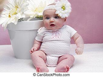 bébé, pot fleurs, pâquerettes