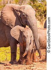 bébé, protéger, mère, elle, éléphant