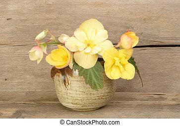 bégonia, arrangement fleur