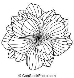 bégonia, fleur blanche, dessin, fond
