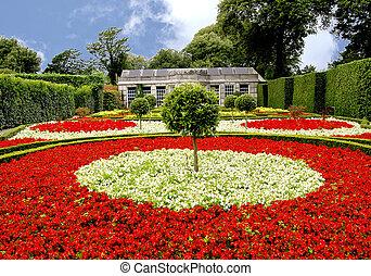 bégonia, jardin