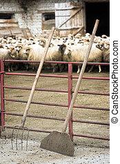bétail, ferme