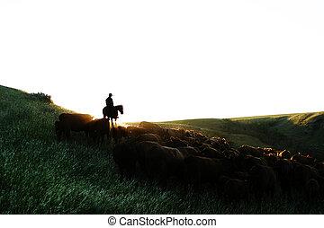 bétail, haut, rond