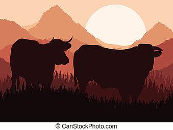 bétail sauvage, paysage, boeuf, nature