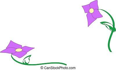 bíbor virág, háttér