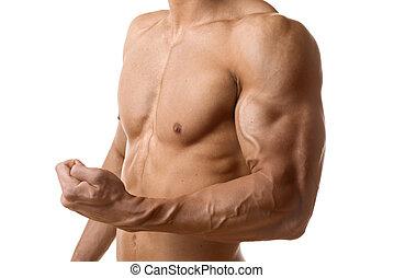 bíceps, músculo, de, homem jovem