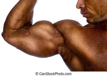 bíceps, mostrando, cima, homem, fim, braço