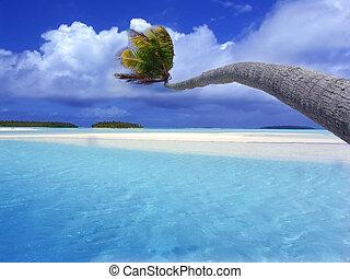böjning, palm, lagun