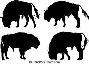 bölény, amerikai, árnykép, buffalo.